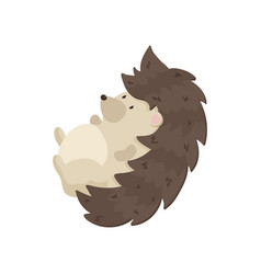 Cute hedgehog lies on his back and swinging close vector