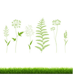 grass set isolated white background vector image