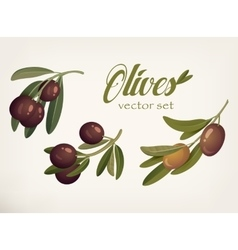 Yellow and ripe berries of olives with bleaks vector image vector image