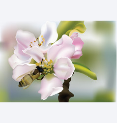 Cherry flowers realistic with vector