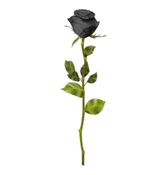 Realistic Black rose EPS 10 vector