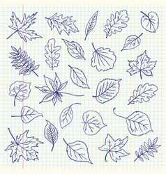 freehand drawing autumn leaves items vector image vector image