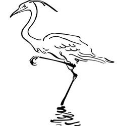 Bird in water vector