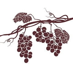 monochrome vine on a white background vector image