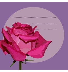 Pink rose on purple background vector image vector image