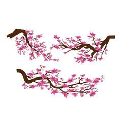 realistic sakura japan cherry branch with vector image