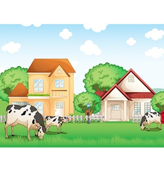 Three cows eating in front of the neighborhood vector