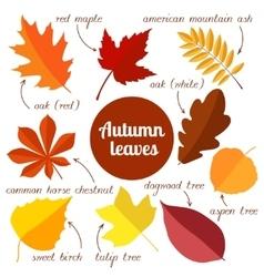 autumn leaves set 2 vector image
