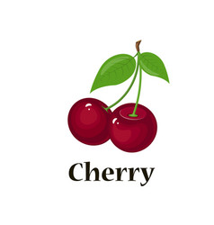 pair of cherries isolated vector image