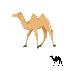 Camel silhouette on white vector image