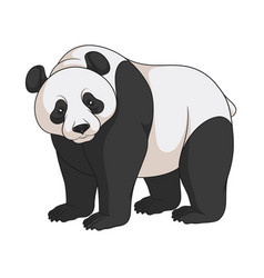 Color image of a panda isolated object vector