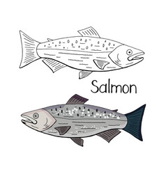 hand drawn salmon fish black and white and color vector image