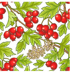 hawthorn branch pattern vector image