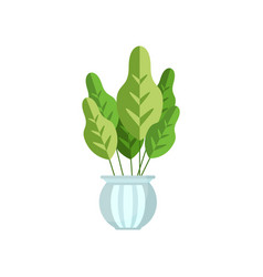 herbaceous house plant indoor flower in pot vector image vector image