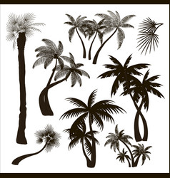 Palms trees collection vector