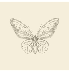 Vintage hand drawing butterfly vector image
