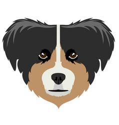 australian shepherd avatar vector image