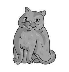 Exotic shorthair icon in monochrome style isolated vector