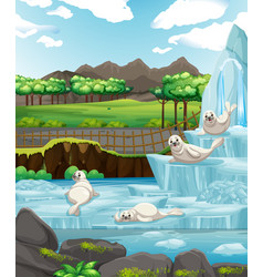 Scene with white seals on ice vector