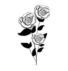 monochrome sketch with plant of roses with leaves vector image vector image