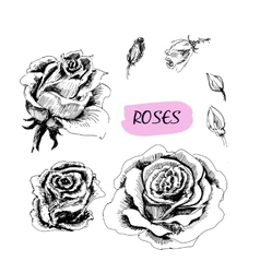 Roses Set of vector