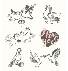 Drawn wedding pigeon love symbol sketch vector
