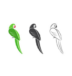 parrot design on white background vector image