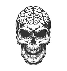 Skull with the brain vector
