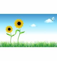 sunflower on green field vector image