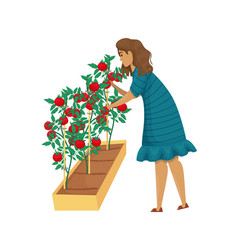 A woman takes care tomatoes in garden vector