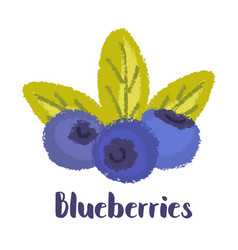 Blueberries forest berry vector