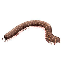Centipede on white background vector