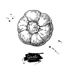garlic hand drawn isolated vector image