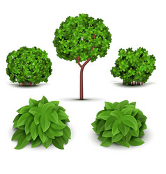 garden bush with green leaves set vector image vector image