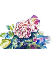 original watercolor painting pink roses vector image