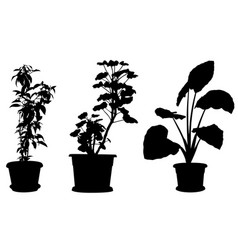 Set of different plants in pots vector