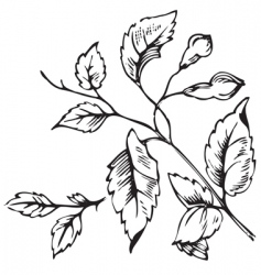 antique foliage engraving vector image