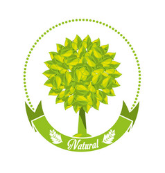 Emblem of tree with leaves and ribbon vector