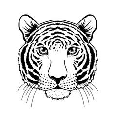 Tiger muzzle on white vector
