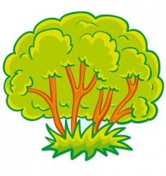 bush vector image