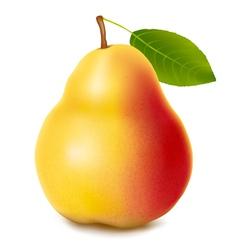 Fresh ripe pear vector