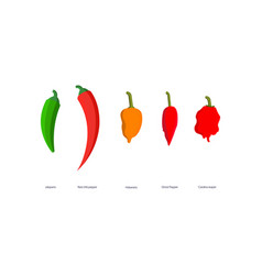 hot spicy peppers vector image