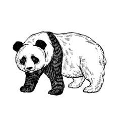 panda bear engraving vector image