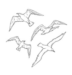 sketch set flying seagulls bird gull vector image