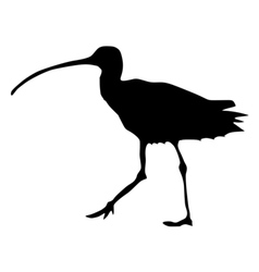 black silhouette of curlew vector image vector image