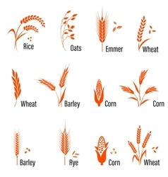 Cereals icon set with wheat vector image