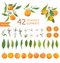 Oranges Flowers and Leaves Lemon Bouquetes vector image vector image