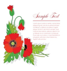 Bouquet of poppies vector