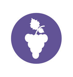 Grape fruit food healthy icon vector