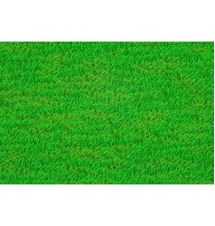 green lawn realistic grass texture eps 10 vector image